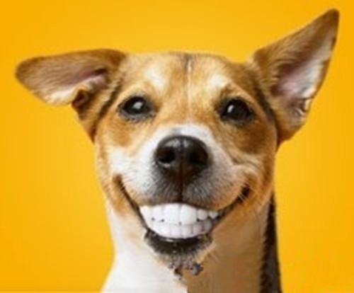 各种动物牙齿的样子